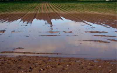 5 Common Sources of Groundwater Contamination